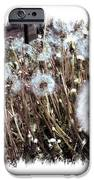 Dandelion Wishes IPhone 6s Case