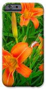 Daylily Greeting IPhone 6s Case by Guy Ricketts