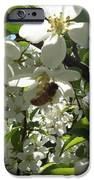 Dogwood Daze IPhone 6s Case by Carrie Viscome Skinner