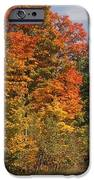 Early Morning In Door County IPhone Case by Sandra Bronstein