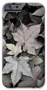 Gold Copper And Silver Leaves 1 IPhone 6s Case by Roger Snyder