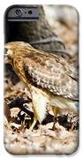 Hawk And Gecko IPhone 6s Case by George Randy Bass