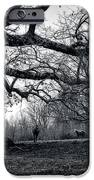 Horses On A Foggy Morning In Black And White IPhone 6s Case