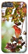 House Finch Hanging Around IPhone 6s Case