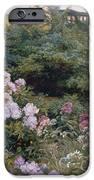 In Full Bloom  IPhone Case by Henry Arthur Bonnefoy