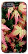Japanese Maple IPhone 6s Case by Cynthia Adams