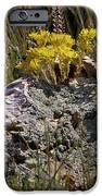Lanceleaf Stonecrop Sedum 1 IPhone 6s Case by Roger Snyder