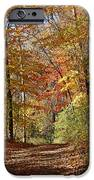 Leaf Covered Path IPhone 6s Case by Kathy DesJardins