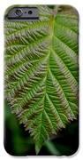 Leaf IPhone 6s Case by Ekta Gupta