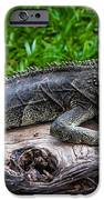 Lizard At The Zoo IPhone 6s Case