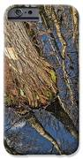Looking Up While Looking Down IPhone 6s Case by Debra and Dave Vanderlaan