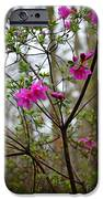 Lovely Bright Pink Flowers IPhone 6s Case by Eva Thomas