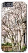 Magnolias In Back Bay IPhone 6s Case