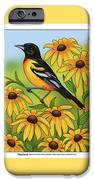 Maryland State Bird Oriole And Daisy Flower IPhone 6s Case by Crista Forest