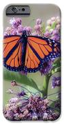 Monarch On The Milkweed IPhone 6s Case