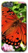 Orange Butterfly IPhone 6s Case