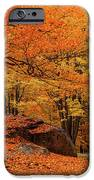 Path Through New England Fall Foliage IPhone 6s Case