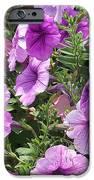 Petunias IPhone 6s Case