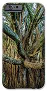 Pipiwai Banyan IPhone 6s Case