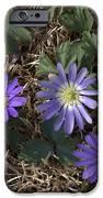 Purple Yard Flowers IPhone 6s Case by Liz Allyn