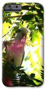 Quaker Parrot With Mimosa Flower IPhone 6s Case by Theresa Willingham
