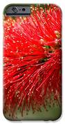 Red Burst IPhone 6s Case by Valeria Donaldson