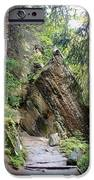 Rock And A Hard Place IPhone 6s Case by Dana Patterson