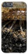 Isopod IPhone 6s Case by April Wietrecki Green