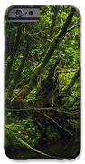 Silent Forest IPhone 6s Case