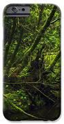 Silent Forest IPhone 6s Case by Stuart Deacon