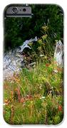 Silver Forest Meadow IPhone 6s Case by Christine Burdine
