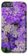 Small Pink Flowers 10 IPhone 6s Case