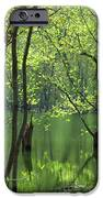 Spring Green  IPhone 6s Case by Lori Frisch