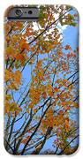 Sprinkles Of Autumn IPhone 6s Case by Guy Ricketts