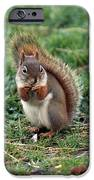 Squirrel IPhone 6s Case