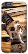 Stepping Down - Calico Cat On Beech Woodpile IPhone 6s Case