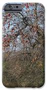 The Apple Tree IPhone 6s Case by Danielle Allard