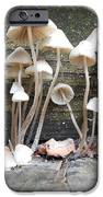 Tiny Mushrooms On The Step IPhone 6s Case by Carrie Viscome Skinner