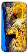 To Squirrels And To Me IPhone 6s Case by Guy Ricketts