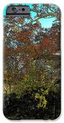 Tree At The Station IPhone 6s Case