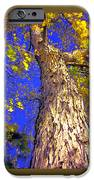 Tree In Motion IPhone 6s Case
