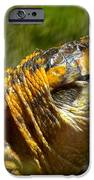 Turtle-turtle IPhone 6s Case by Stephanie  Varner