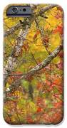 View From My Window IPhone 6s Case by Lori Frisch