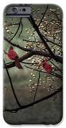 Visitors  IPhone 6s Case by Kim Loftis