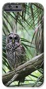 Whoooo Are You IPhone 6s Case by April Wietrecki Green