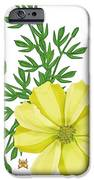Yellow Cosmos IPhone 6s Case by Anne Norskog
