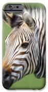 Zebra Portrait IPhone 6s Case by Trevor Wintle