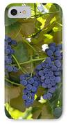 Agriculture - Concord Tablejuice Grapes IPhone Case by Gary Holscher