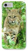 Bobcat Lynk Sitting In Grass Close-up IPhone Case by Sylvie Bouchard