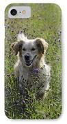 Golden Retriever Dog IPhone Case